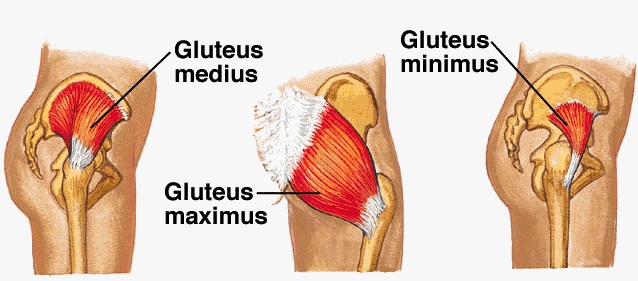 """Got Glutes? How Runners Can Increase Power and Performance by Having """"Smart  Behinds"""" 